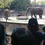 Tobe zoo elephants