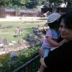 Tobe zoo zebra